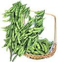 【枝豆種子】湯あがり娘 枝豆 100粒 (カネコ種苗)【野菜の種】