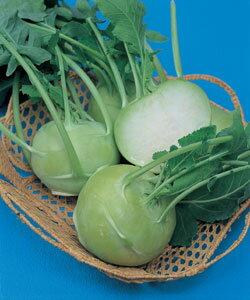 料理の幅が広がるコールラビ!球形に肥大した茎を食べる!【コールラビ種子】 グランデューク...