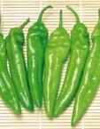 【とうがらし種子】【ジャンボトウガラシ】 福耳(ふくみみ) (サカタのタネ)小袋【野菜の種】