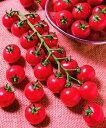 ミニトマト種子 タキイ種苗 TY千果1000粒