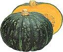 【カボチャ種子】恋するマロン 南瓜 50粒 (カネコ種苗)【野菜の種】     [02P09J…