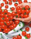 ミニトマト種子 サカタのタネ ミニキャロル 5ml