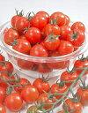 ミニトマト種子 ミニキャロル 小袋 (サカタのタネ)