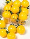 ミニトマト種子 サカタのタネ イエローキャロル ペレット200粒