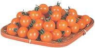 今日のおやつも、明日のおやつもオレンジパルチェ【ミニトマト種子】 オレンジパルチェ (カ...