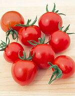 中玉トマト種子 シンディースィート (サカタのタネ) 小袋(23粒)