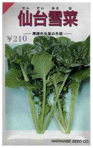 仙台雪菜 (渡辺採種) 小袋(11ml)