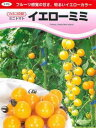 フルーツ感覚の甘さ、明るいイエローカラーのミニトマト【ミニトマト種子】 イエローミミ (...