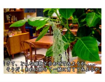 植物との相性もばっちり