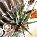 【いなざうるす屋 フェイクグリーン】トゲトゲアロエ 壁飾り 壁掛けインテリア 観葉植物 ウォールデコレーション 緑 壁掛け インテリア イミテーショングリーン 模様替え 癒し プレゼント 引越し 一人暮らし お祝い おしゃれ 可愛い