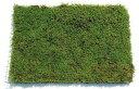 コケ・ハイ苔(ハイゴケ 這苔 ネットマット)緑の絨毯 8枚セット グランドカバー 植木 庭木 苗木