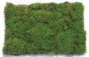 コケ・カモジ苔(カモジゴケ ネットマット) 緑の絨毯 4枚セット 植木 庭木 苗木