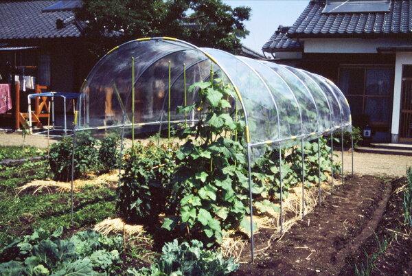 ビニールハウス雨よけハウス組立セット間口2.2mX奥行5.4mX高さ2.0m2うね用17〜18株埋め込み式野菜家庭菜園法人も個人