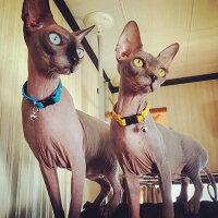 猫用スタッズ革首輪:CatsBtype002(平尖鋲)