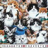 ES-3275子猫たちオールオーバー