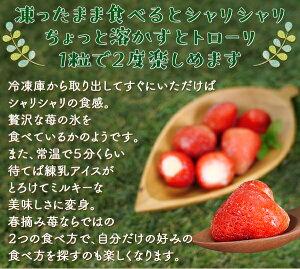 [お取り寄せ(楽天)] 春摘み苺アイス(30粒)アイスクリーム お子様にもおすすめ♪ 価格2,500円 (税込)