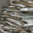 わかさぎ 【カナダ産ワカサギ7.6〜10cm/150尾】冷凍食品 食品 業務用 家庭用 食材 ご飯のお供 魚介