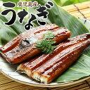 うなぎ 鰻 蒲焼 (国産大ウナギ 鹿児島産鰻蒲焼き約170g) 業務用 家庭用 ご飯のお供 国産