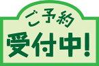 【9月予約】 劇場版 ONEPIECE STAMPEDE ワールドコレクタブルフィギュアvol.2 全6種セット