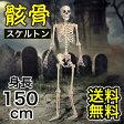 skeleton 骸骨(がいこつ) 150cm インテリア 小物 置物 標本 スケルトン 人体模型 骨 人体骨格模型 骨格模型 人体 骨格標本 骨標本 骨格モデル 骨の模型 骨 骸骨 ガイコツ ヒューマンスカル スカル ハロウィン 肝試し 全身 コストコ costco 商品 通販