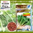 クロネコDM便ご利用で送料無料!パクチー(コリアンダー・香菜・シャンツァイ・タイ野菜・タイハーブ)種