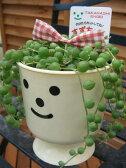 多肉女子 グリーンネックレス すずちゃん3.5号サイズ 鉢植え 多肉植物 グリーン ネックレス