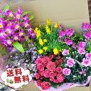 【ポイント10倍】送料無料★超特大びっくり福袋!季節の鉢花を...