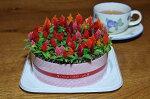 ケイトウお花のキャンドルケーキ!もちろん全て生きたお花です♪【鉢花】【花】【ギフト】【誕生日】【プレゼント】【寄せ植え】【フラワーケーキ】【ケーキ】