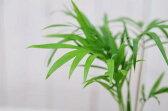 ヤシ 観葉植物 ミニチュア テーブル ヤシ 観葉植物