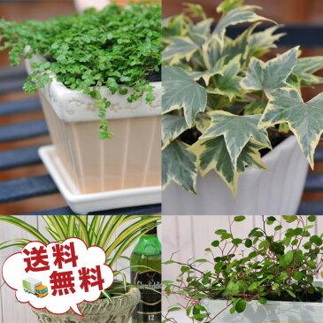 ミニ観葉植物5株セット 観葉植物 リーフプランツ 観葉植物福袋 誕生日プレゼント 観葉植物プレゼント 送料無料 ギフト プレゼント