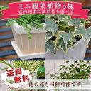 【ポイント2倍】ミニ観葉植物5株セット 観葉植物 リーフプランツ 観葉植物福袋 誕生日プレゼン…