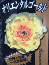 シャクヤク・オリエンタルゴールド苗♪牡丹・花香殿と芍薬・金晃の一代交配種。庭植え/鉢植えで...