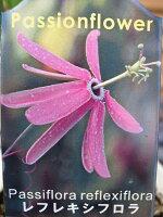 トケイソウレフレキシフロラ花苗ワンランク上のグリーンカーテンにさまざまな花を楽しめる時計草販売通販種類