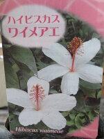 ハイビスカスワイメアエ/ハワイカウアイ島原産のハイビスカス花苗販売通販種類