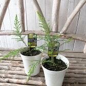 モスキートブロッカー 観葉植物 モスキートブロッカー 虫除け 蚊を寄付けない花も楽しめるすぐれもの モスキートブロッカー 販売 通販 種類 虫除け 蚊よけ
