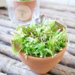 食虫植物セファロタスフォリキュラリスレア食虫植物2号ポット苗プラントBOX付フクロユキノシタ