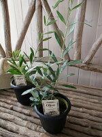 オリーブベランダ4号鉢テーブルサイズ観葉植物