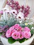 【送料無料】ハートブレイカーエルフピンクバラ咲きジュリアン花かんざしアリッサム5株寄せ植えセット