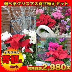 ホワイトクリスマス寄せ植えセット、ピンク系クリスマス寄せ植えセット