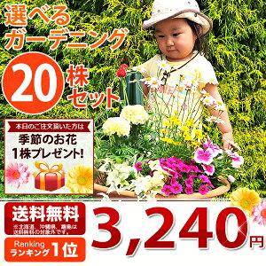 花苗 選べる花ガーデニング 季節の花苗セット 福袋 花 母の日 プレゼント 送料無料 花 お母…