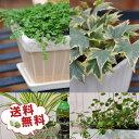 観葉植物 福袋 季節のお花またはミニ観葉植物5株セット 福袋...