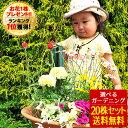 【クーポン利用で200円OFF】花苗 選べる花ガーデニング