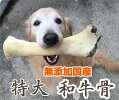 無添加国産和牛骨特大和牛の骨1本BIGサイズ犬のおやつげんこつ付きボーン5000円(税抜)以上送料無料!/【RCP】