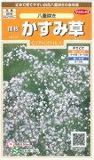 八重咲き サカタのタネ