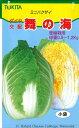 白菜 舞の海 2ml トキタ種苗
