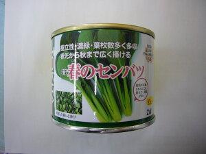 野菜種 小松菜春のセンバツ 2dlトキタ種苗