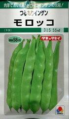 肉厚でおいしいモロッコインゲンの元祖です野菜種 いんげんつるありモロッコ 55mlタキイ交配