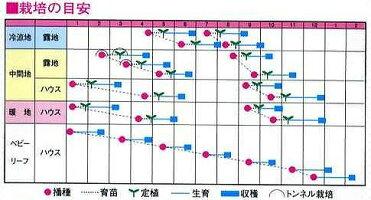 野菜種中国野菜宝みどり5ml三芳交配