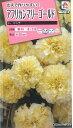 お得な1割引き!マリーゴールド 八重咲き バニラ色花の種オール1割引き!アフリカンマリーゴ...