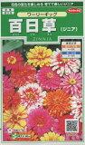 花の種 百日草 (ジニア)ワーリーギッグ 小袋 サカタのタネ